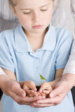 Seedling on hands Stock Image