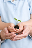 Seedling on hands Stock Photo
