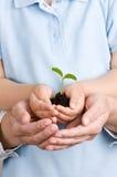 Seedling on hands. Seedling in soil on hands Stock Photo