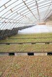Seedling hothouse Royalty Free Stock Image