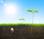 Seedling illustration soil Royalty Free Stock Photos