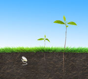 Seedling illustration soil Stock Photography
