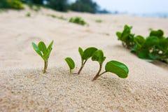 Seedling In Desert Stock Images