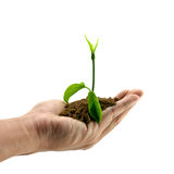Seedling In Hand Stock Photography