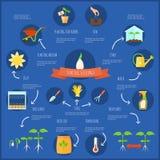 Seedling Infographic Set stock illustration