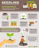 Seedling Infographics Set Stock Photography