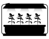 Seedling lighting Royalty Free Stock Photos