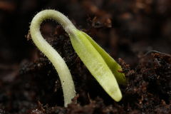 Seedling Macro Stock Images