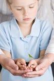 Seedling nas mãos Imagem de Stock