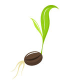 Seedling - newborn plant Royalty Free Stock Images