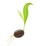 Seedling - newborn plant Royalty Free Stock Images