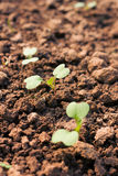 Seedling novo Fotografia de Stock Royalty Free