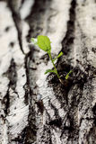 Seedling at the old tree Royalty Free Stock Images