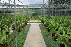 Seedling orchid in greenhouse Stock Image