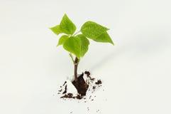 Seedling through paper tear Stock Photos