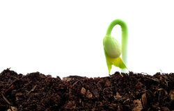 Seedling plant Stock Images