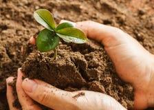 Seedling plant Stock Photography