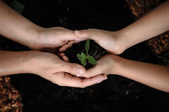 Seedling of plant in child hand royalty free stock images