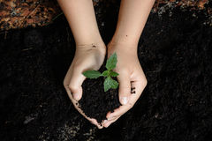 Seedling of plant in child hand Stock Images