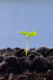 seedling plant growing from the ground , concept for business grow Royalty Free Stock Photos