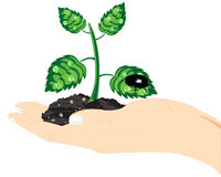 Seedling of the plant in hand Stock Photography