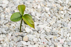 Seedling plant Stock Photography