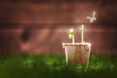 Seedling plants in the grass Royalty Free Stock Images