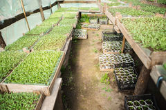 Seedling plants in the greenhouse. Nature Royalty Free Stock Photography