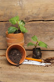Seedling plants and pots stock image