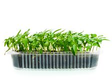 Seedling in plastic box stock images