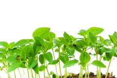 Seedling in plastic box royalty free stock photography