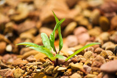 Seedling rock Stock Photo