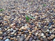Seedling. In rock garden Royalty Free Stock Photos