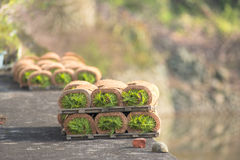Seedling(roll) stock photography