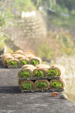 Seedling roll royalty free stock photo