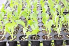 Seedling Stock Photos