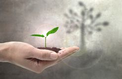Young plant growth concept Stock Images
