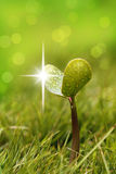 Seedling with shining droplets of water Royalty Free Stock Photo