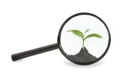 Seedling sob uma lupa Fotografia de Stock