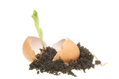 Seedling and soil in an egg Stock Images