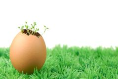 Seedling sprout from egg Stock Image