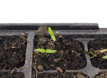 Seedling Start Stock Images