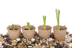 Seedling in starter pots Royalty Free Stock Images
