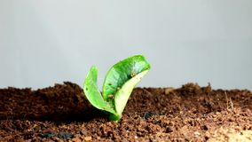 Seedling stock footage