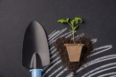 Seedling of tomato with earth on black chalkboard as background. For season of vegetable garden Royalty Free Stock Photography