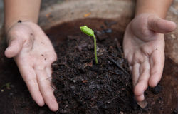 Seedling Royalty Free Stock Photography