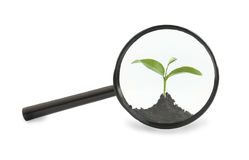 Seedling under a magnifying glass Stock Photography