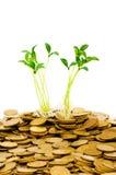 Seedling verde Imagem de Stock