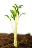 Seedling verde que cresce das moedas fotografia de stock royalty free