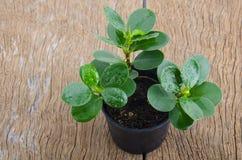 Seedling Stock Photography